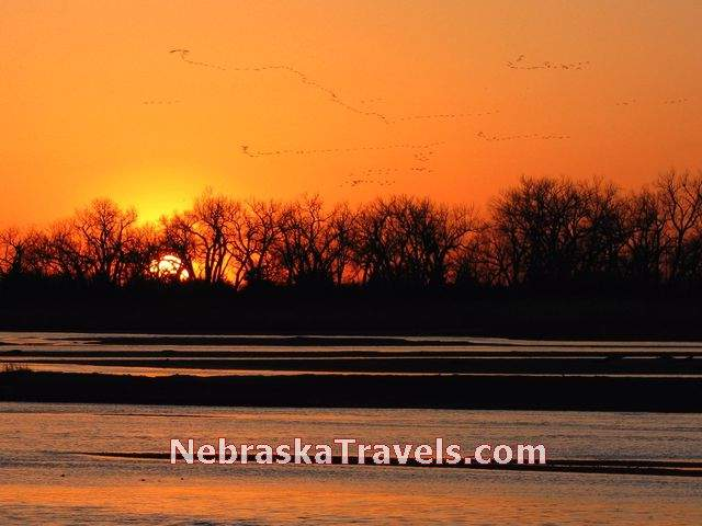 Flocks of Sandhill Cranes at Sunset Photo with Red Color - On Platte River near Gibbon, Nebraska