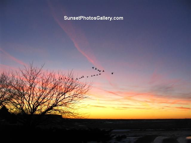 Colorful orange, red & blue country sunset sky with a flock of Geese flying in V + red jet trails