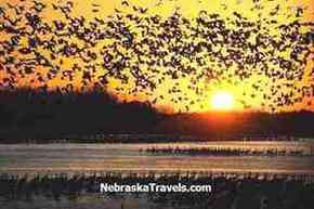Sandhill Cranes Migration - Sunrise Crane Liftoff from the Platte River - Taken from a Crane Trust Viewing Blind