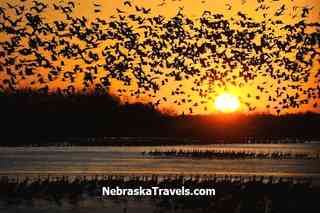 "Sunrise ""Liftoff"" of Sandhill Cranes Roosting on Platte River during Sandhill Crane Migration"