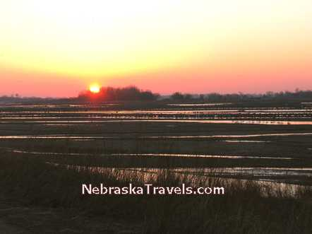 "Sandhill Cranes Roosting on the Platte River at Sunrise before ""Liftoff"" to go to feed in the nearby cornfields"
